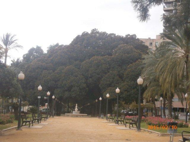 Explanada de España - drzewa