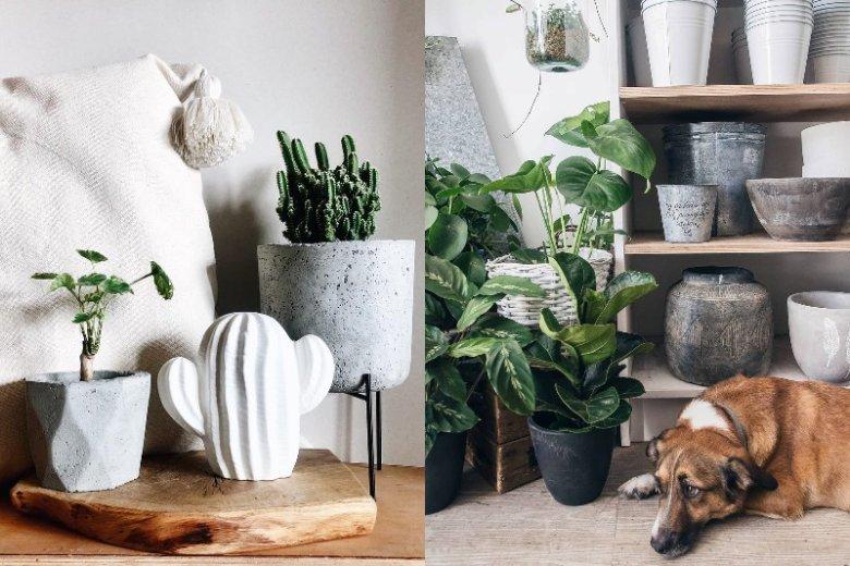 Surowe betonowe doniczki to wnętrzarski hit. Te marki beto.nove kupisz już od 30 zł. Piękne rośliny znajdziecie w kwiaciarniach, popularnych sklepach z elementami do wnętrz i małych butikach takich jak Plantarium