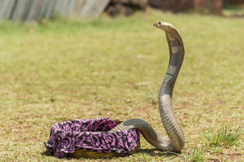 Tak wyglądał wąż, którego poskromiła Marta Wierzbicka.