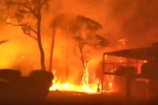 Pożary trawią Australię od września. W grudniu jest najgorzej.