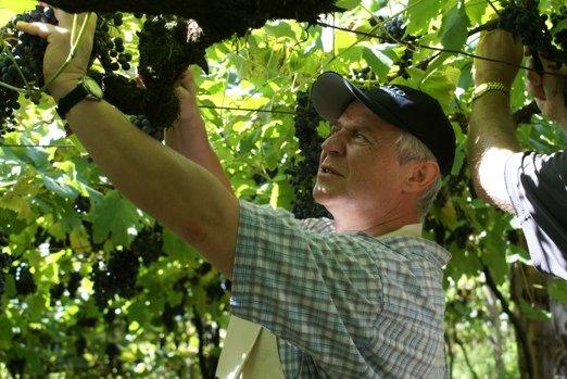 Marek Kondrat na winobraniu w Brazylii.