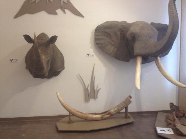 Wystawa, która ma być sposobem na promocję Kielc.