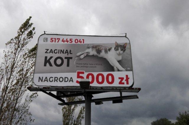 Billboard z nietypowym ogłoszeniem.