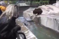 Zaatakowanej niedźwiedzicy nic się nie stało.