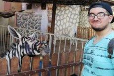 """Zoo w Kairze zapewnia, że jego """"zebra"""" to nie osioł."""