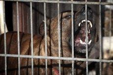 Prawdopodobną przyczyną śmierci mężczyzny jest zagryzienie przez pilnujące terenu psy.
