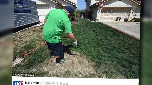 Malowanie trawy to nie mit.