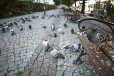 Gdy gołębie brudzą, że żyć się nie da. Wiele miast ma ten problem.