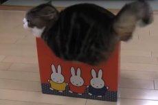 Dla kotów żadne kartonowe pudełko nie jest za małe...