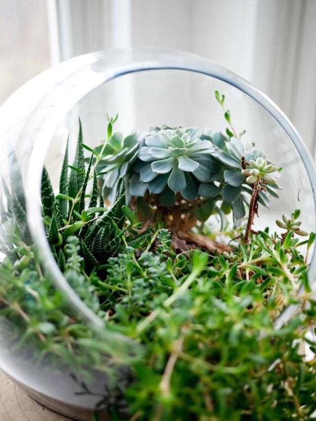 Zieleń uspokaja, żywa zieleń maksymalnie odstresowuje