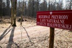 Zdaniem KE Polska narusza unijny system ochrony.