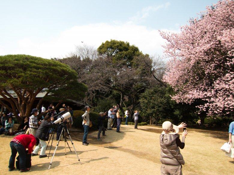 Jak co roku, trzeba te piękności uwiecznić. (i to jakim sprzętem!) - w moim ulubionym parku - Shinjuku Gyoen