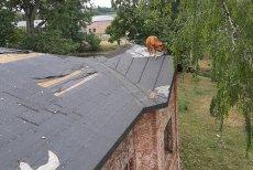 Krowa na dachu. Akcja strażaków z OSP w Sochocinie