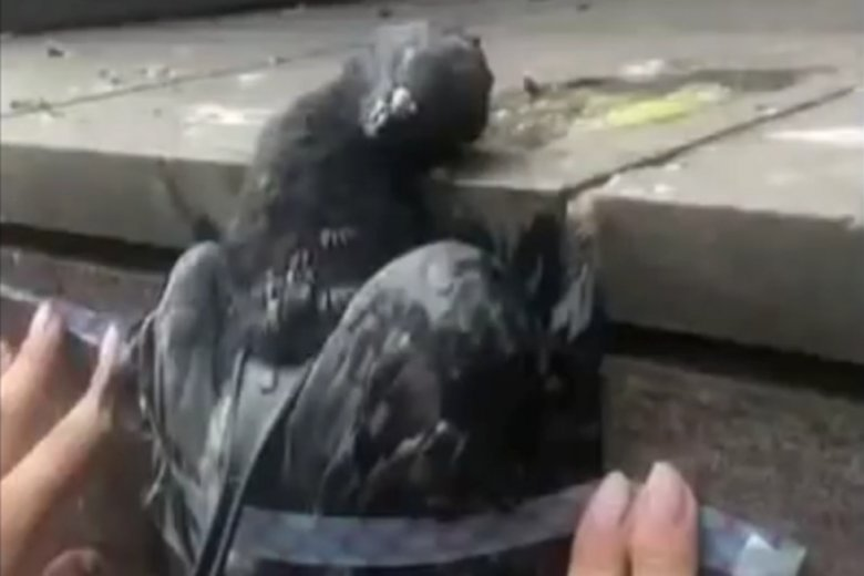Dzieci pastwiły się nad zdechłym gołębiem.