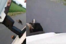 Mężczyzna celowo dwukrotnie przejechał psa, a nagranie z tego zdarzenia umieścił w sieci.