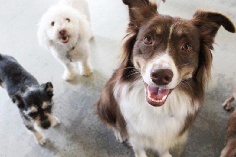Hotele dla psów, opieka nad zwierzakami w domu - petsitting jest w Polsce coraz bardziej popularny