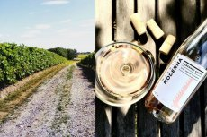 Polskie wina są na wysokim poziomie. Przodują białe, ale smaczne są również czerwone i różowe