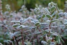 Padł rekord zimna we wrześniu. Meteorolog w szoku.