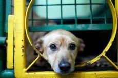 Pies z katowickiego schroniska