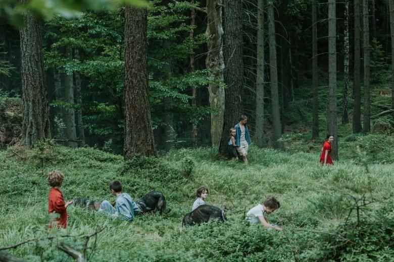 Już sam las dodaje +10 do strachu w horrorze