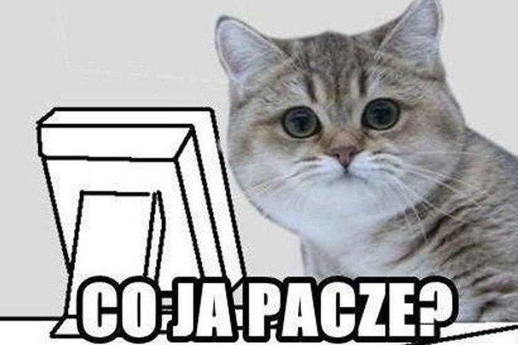 "Rys. 2. Polska wersja mema ""co ja pacze?"""