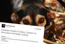 Dziennikarz zaangażował się w sprawę zmasakrowanego psa. Sprawca jest poszukiwany.