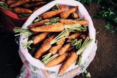 Warzywa z domowego ogródka to samo zdrowie. Jeśli chcemy się nim cieszyć na wiosnę, uprawę należy zaplanować już teraz.
