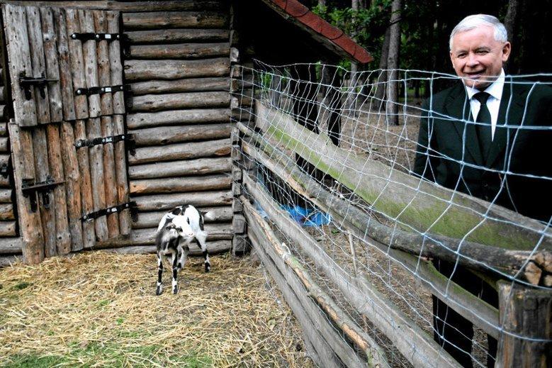 Projekt ustawy o ochronie zwierząt musiał paść pod naporem politycznej kalkulacji i kampanii wyborczej.