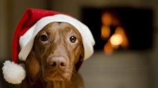 Co Twój pies powiedziałby Ci, gdyby wigilijny przesąd był prawdziwy?