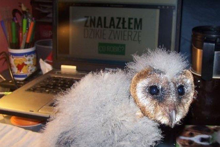 Kolejny pacjent Dzikiej Kliniki z Krakowa.