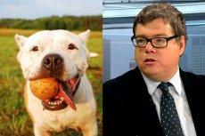 Dominik Zdort utrwala tabloidowy mit, że w większości psów tkwi morderca.