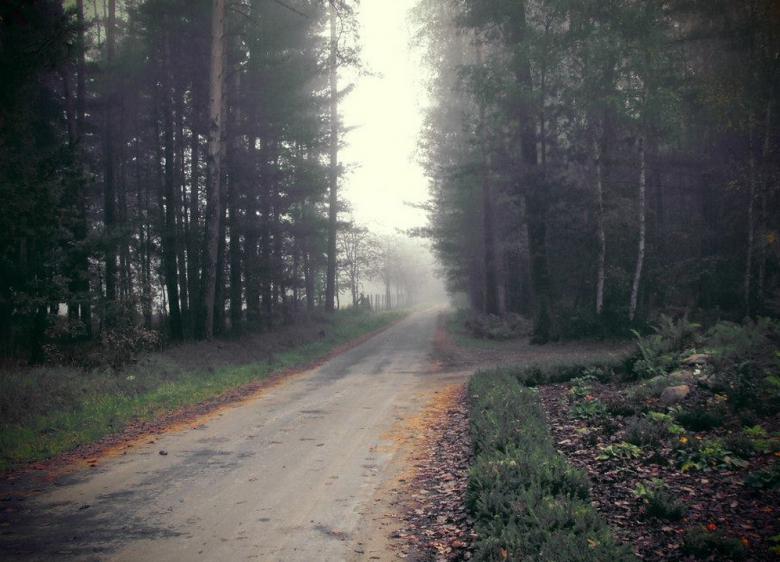 Lasy Państwowe wycinają coraz więcej drzew?