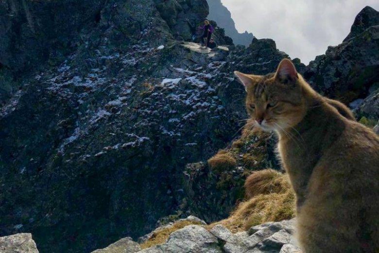 Kot turysta w Tatrach