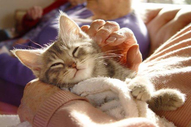 Przytulacz kotów - chyba najlepsza praca na świecie. Można to jednak robić także w Polsce.