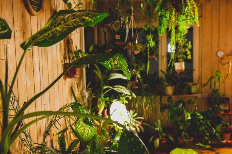 Solatorium to zimowy ogród na warszawskim Jazdowie. Pełny roślin i lamp pomagających walczyć z depresją