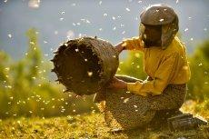 """""""Kraina miodu"""" nie jest tylko filmem o pszczołach"""