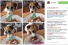 To zdjęcie psa Karoliny Korwin-Piotrowskiej wywołało lawinę komentarzy. Jedni byli zachwyceni, inni wręcz przeciwnie.