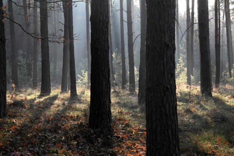 Lasy Państwowe są szeroko krytykowane - wszystko w czasie, kiedy ważą się losy referendum m.in. w ich sprawie.