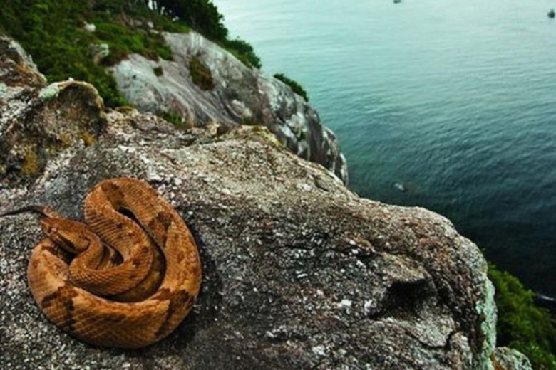 Tę wyspę w większości zamieszkują węże