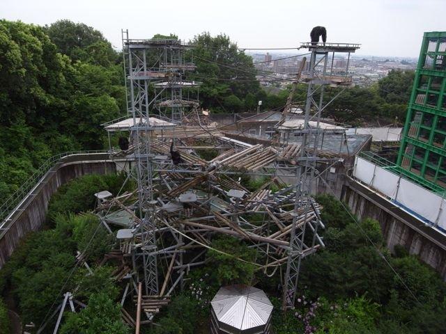 Ośrodek w Kyoto w którym mieszkająmałpy w warunkach półnaturalnych
