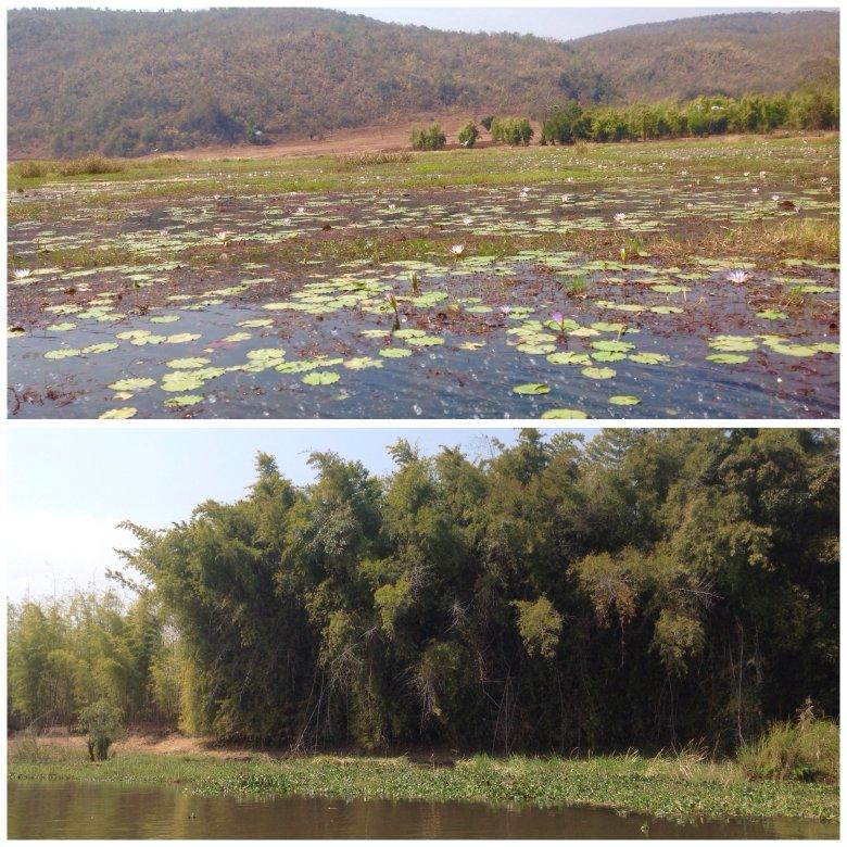Fot.1 -Podmokłe łąki, kwiaty, lotosu kwitnące  wzdłuż jeziora Inle/Birma Fot.2- bambusowy las rosnący nad jeziorem Inle/Birma