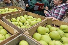 Francuzi nie chcą polskich jabłek?