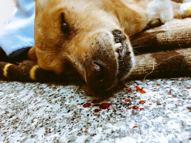 Tego psa nie udało się uratować. Potrącony przez samochód, przez kilka godzin umierał w rowie mimo zawiadomienia policji.