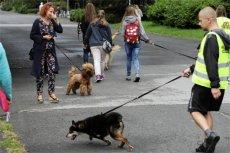 """Opieka nad psem to nie tylko codzienna """"micha"""" i spacer."""
