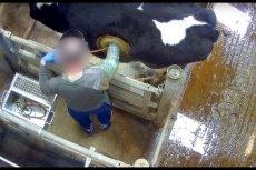 Proces pokazany na nagraniach z ukrytej kamery nazywa się fistulizacją.