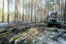 Wycinka polskich lasów