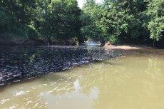Zanieczyszczona przez alkohol rzeka w Kentucky.