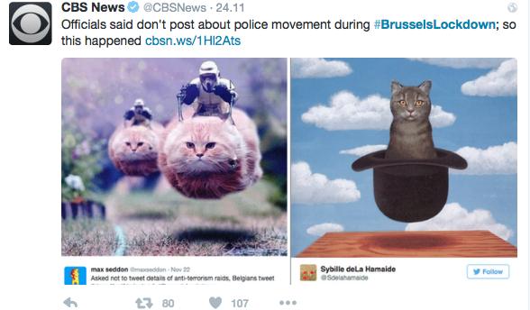 Pod hastagiem #BrusselsLockDown widniały zdjęcia kotów.