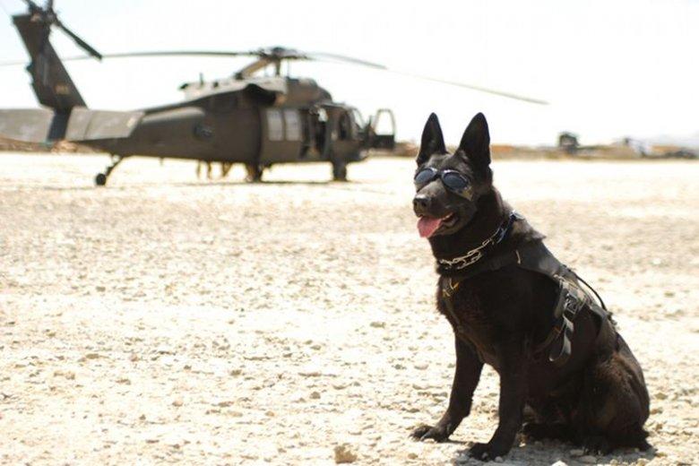 W polskim kontyngencie w Afganistanie obok żołnierzy służą też psy.