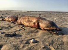 Stworzenie znalezione na plaży w Texas City